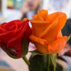 Roses at Milinik