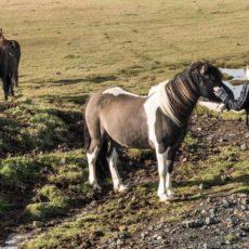 Barbara with Horse