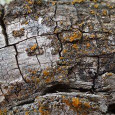 Bark and lichen Texture