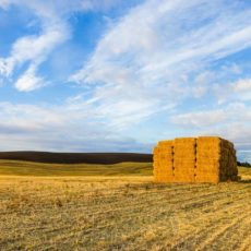 Golden bales at sunset in the Palouse